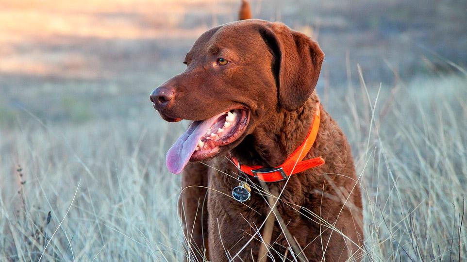 адресник для собаки с гравировкой